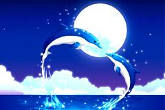 浪漫海豚情侣矢量图