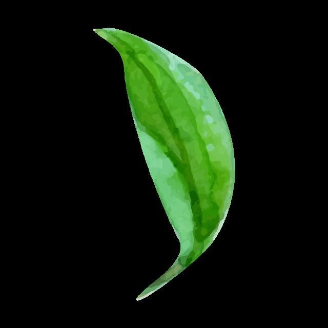 单片绿色叶子