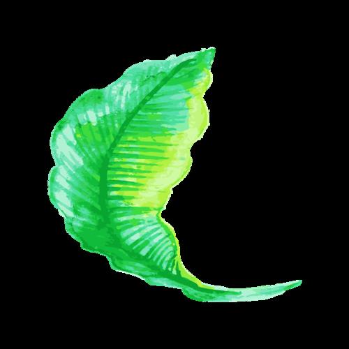 绿色树叶装饰图案