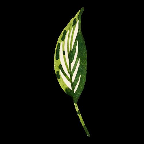单片水彩树叶