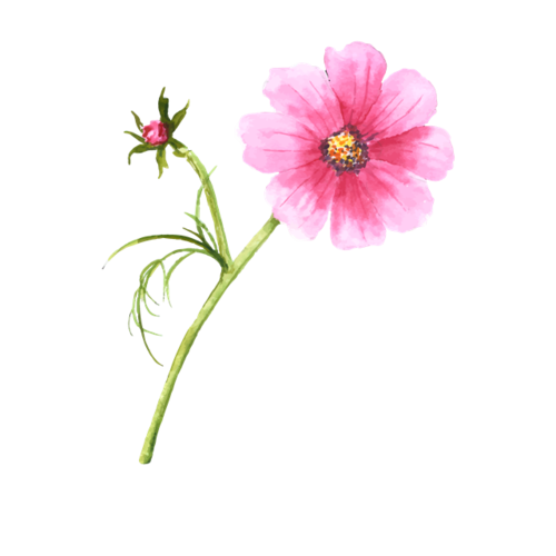 粉色红缨花朵图片