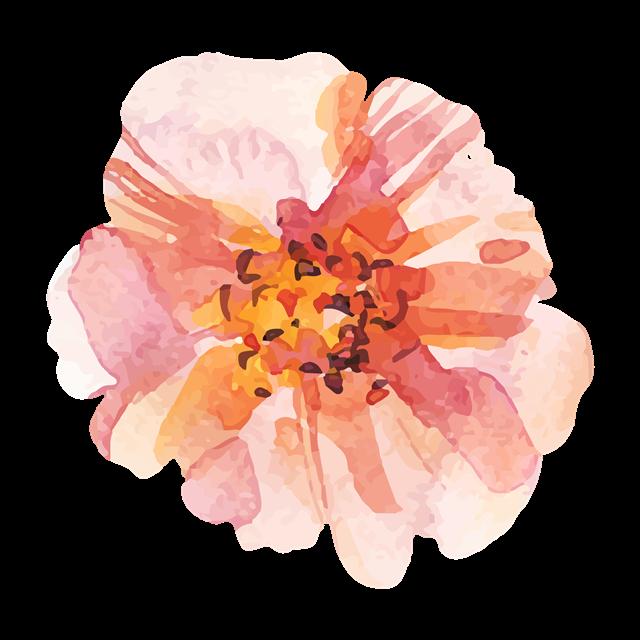 粉色牡丹花免抠图
