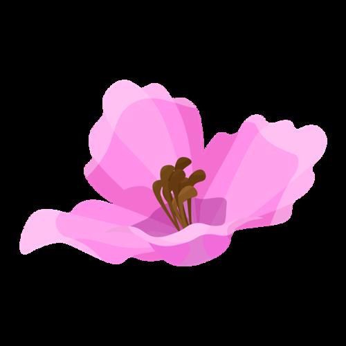 盛开的粉色花朵矢量图