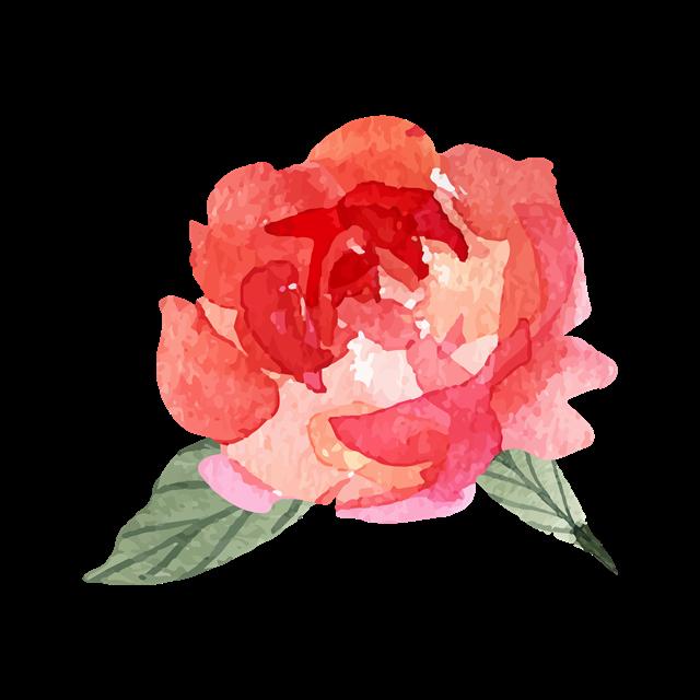 国花牡丹花彩绘