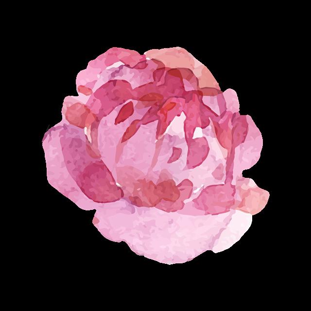 国花牡丹花彩绘图片