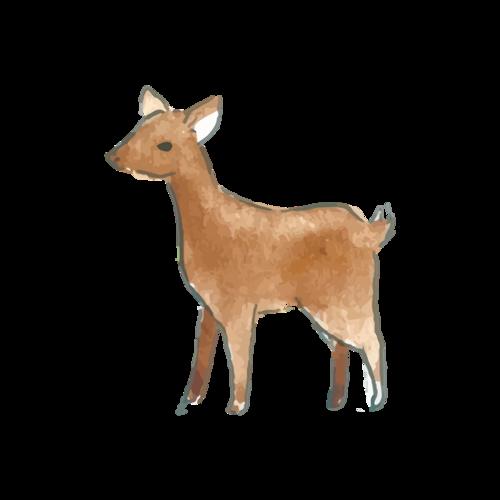 可爱小麋鹿素材