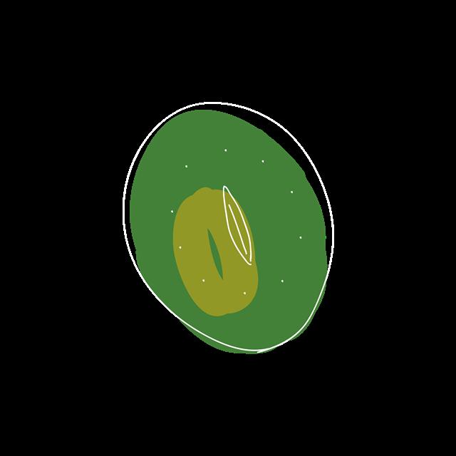 手绘猕猴桃图片