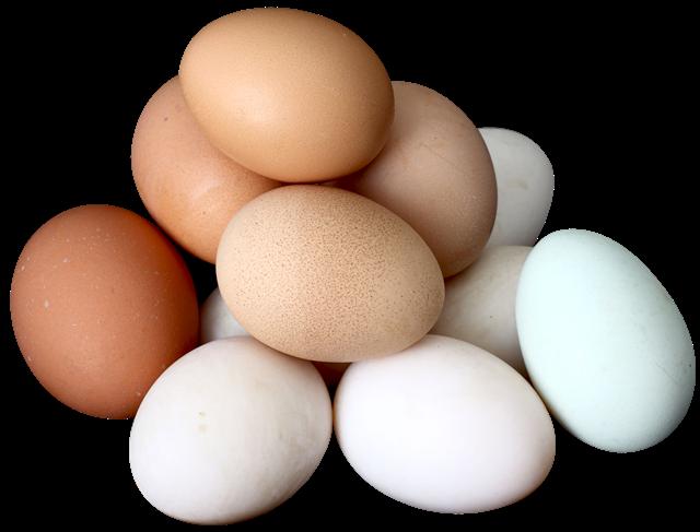 一堆鸡蛋图片