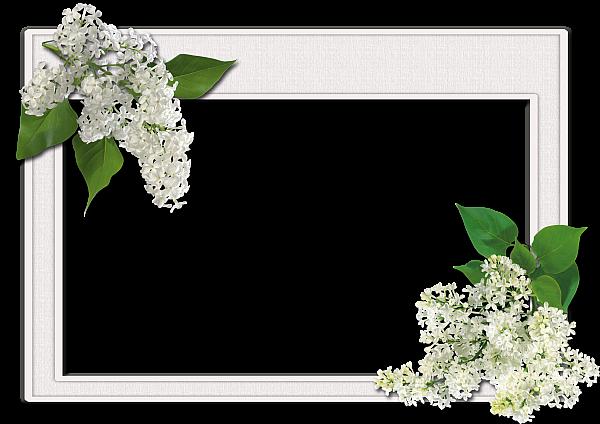 花朵相框图片
