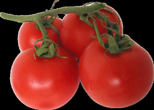 西红柿实拍图