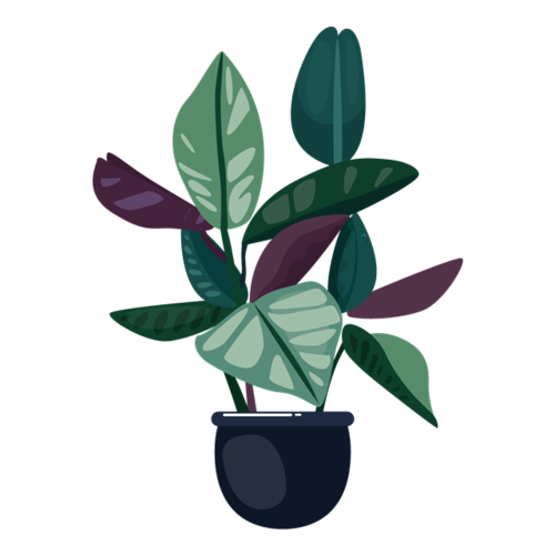 室内植物盆栽