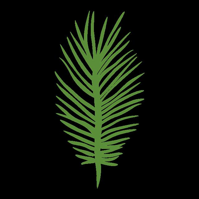 简约棕榈树叶