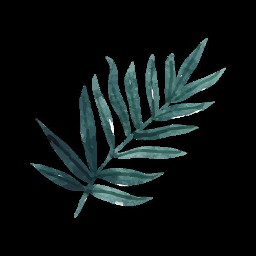 绿色彩绘棕榈叶