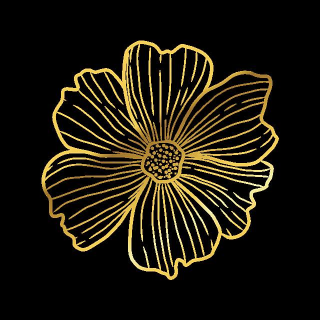 单个花朵图片