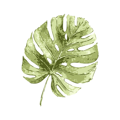 水彩绘棕榈叶