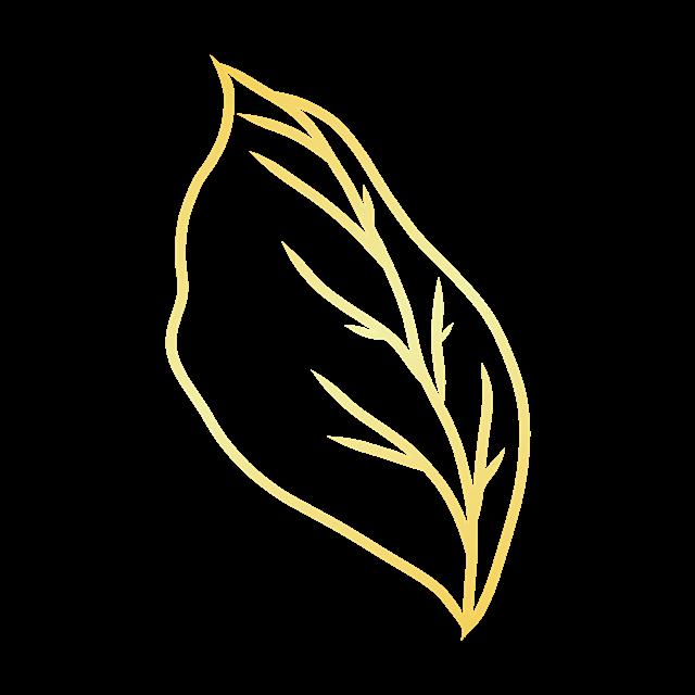 金色树叶图片