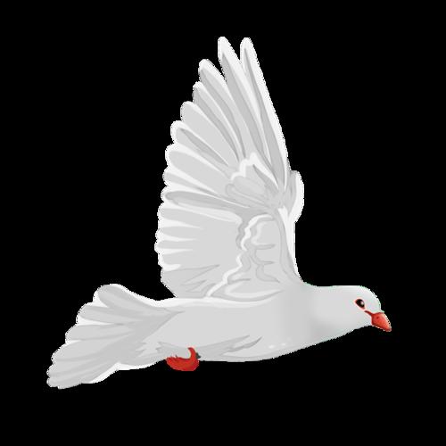 放飞和平鸽图片