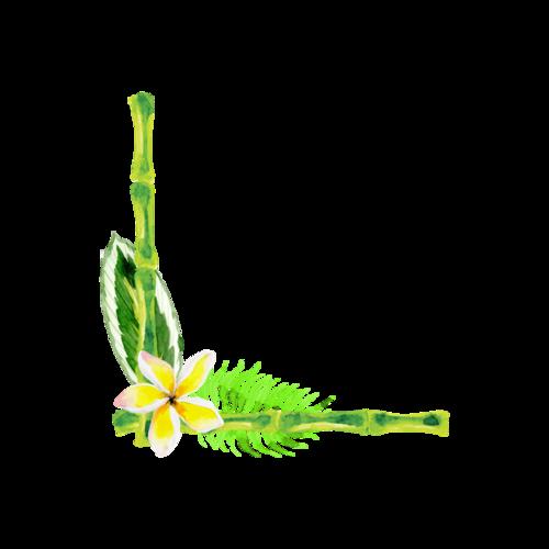 彩绘竹子边框