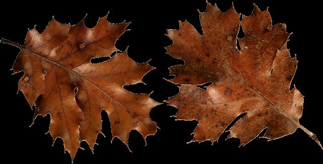 枯萎的树叶插画
