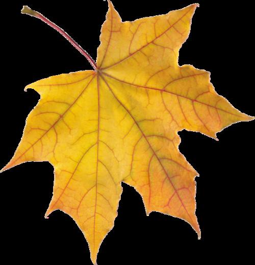 秋天红色枫叶矢量图