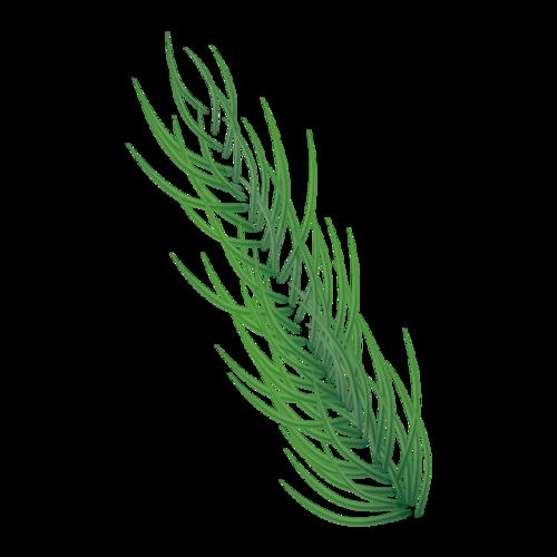 绿色细叶子