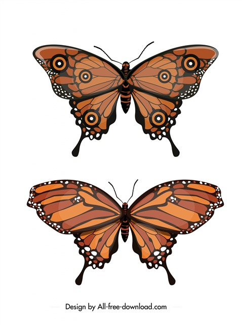 花蝴蝶矢量图