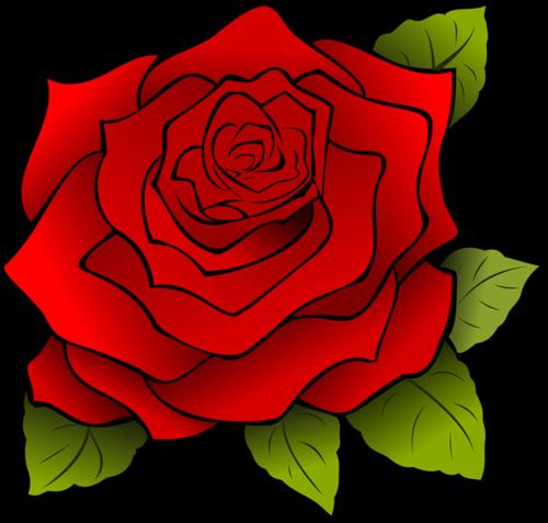 手绘红玫瑰玫瑰花