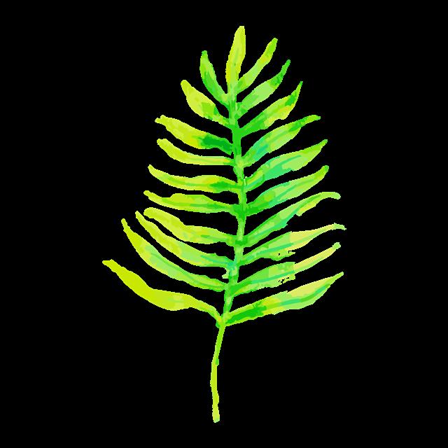 水彩棕榈叶图片