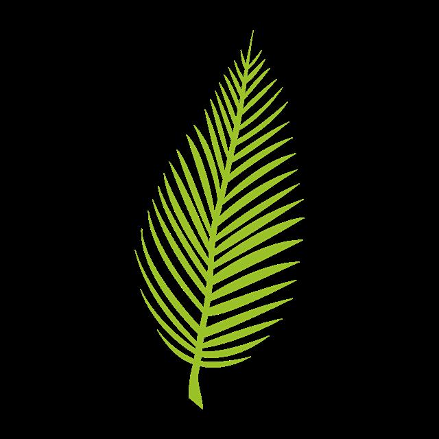 棕榈叶图片