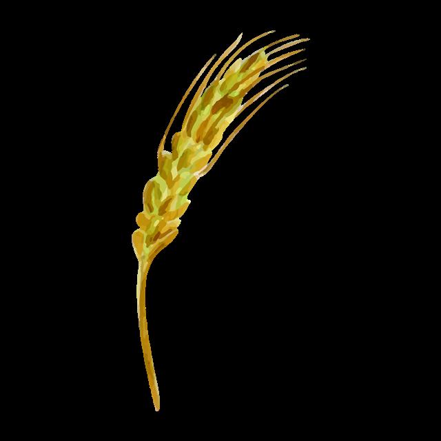 金黄麦穗矢量图
