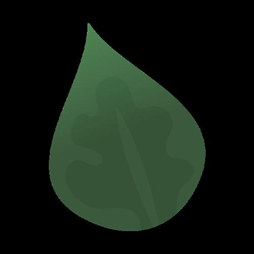 热带植物树叶