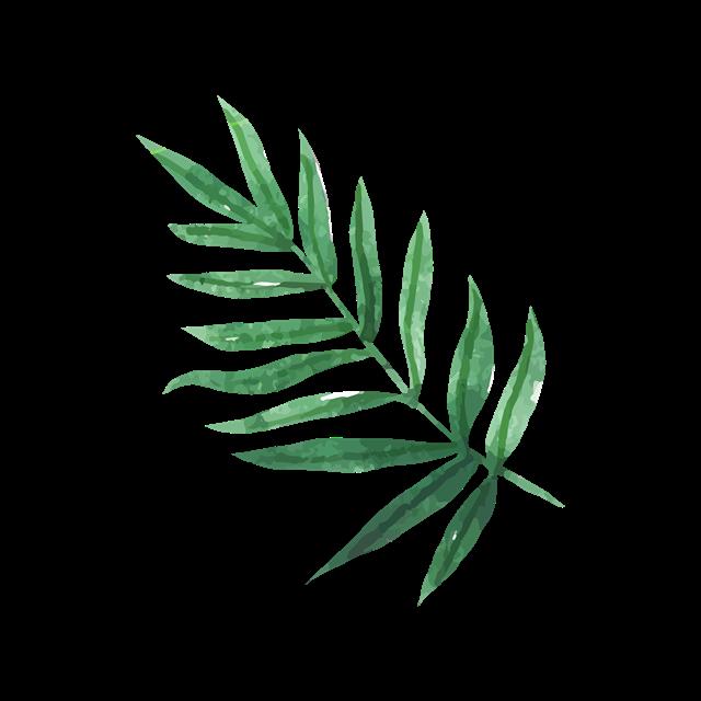 棕榈叶装饰图片