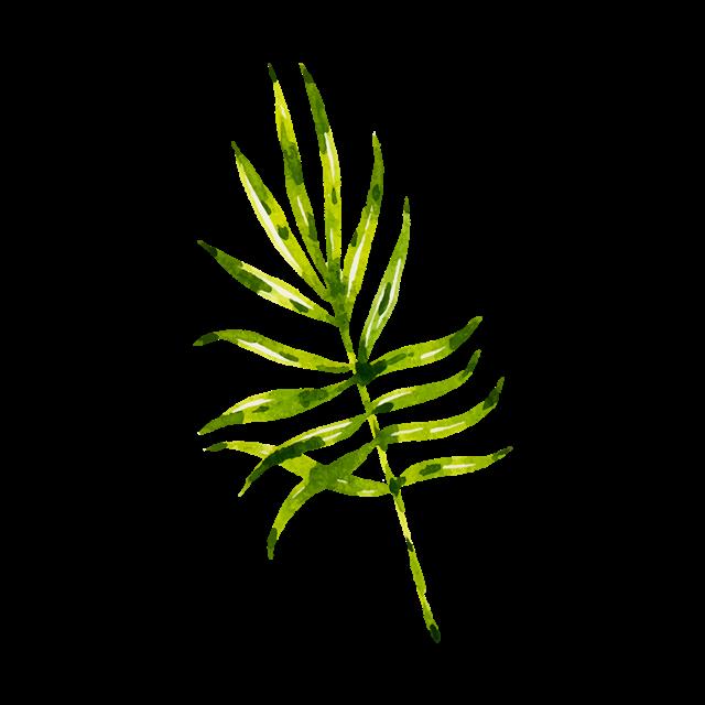 棕榈叶子矢量图
