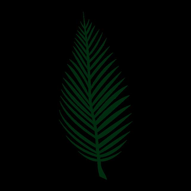棕榈叶矢量图