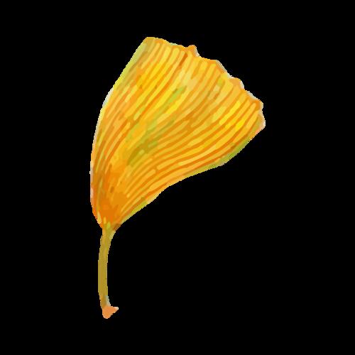 一片银杏叶插画