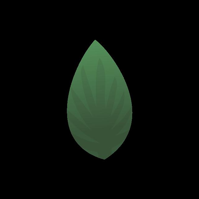 热带绿色树叶图片