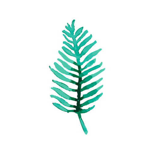 棕榈树叶图片