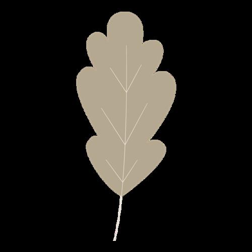褐色树叶简笔画