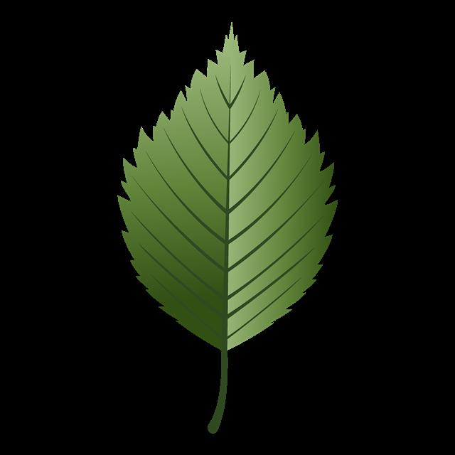 手绘绿色树叶矢量图