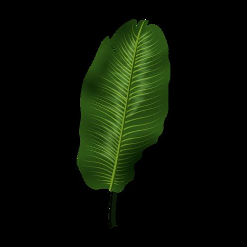 热带芭蕉叶矢量图