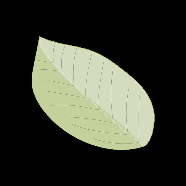 简约叶子矢量图