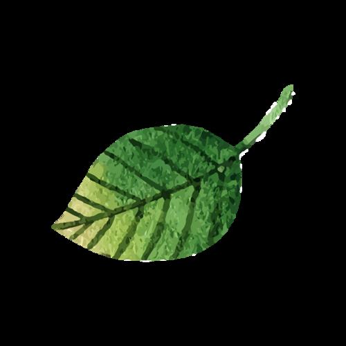 漂浮树叶矢量图