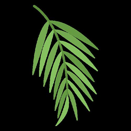 棕榈树叶子素材