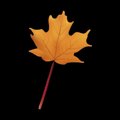 手绘枯萎枫叶图片