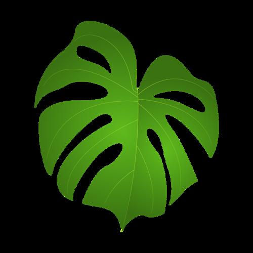 龟背竹叶矢量素材