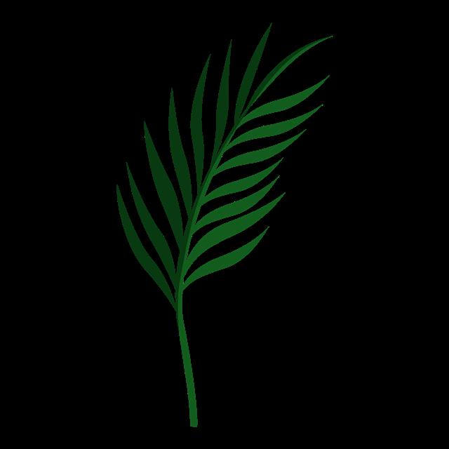 棕榈叶扇叶手绘素材