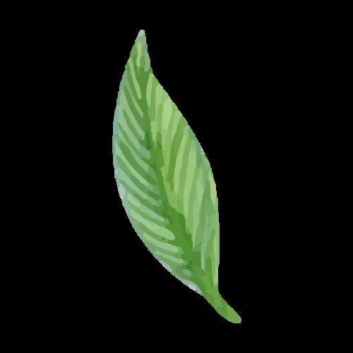 手绘绿叶素材