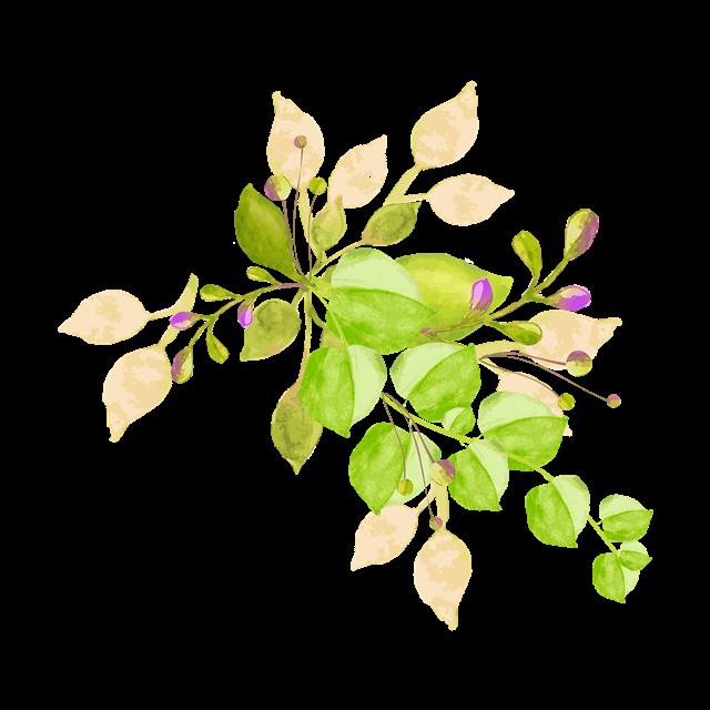 彩绘叶子装饰图片
