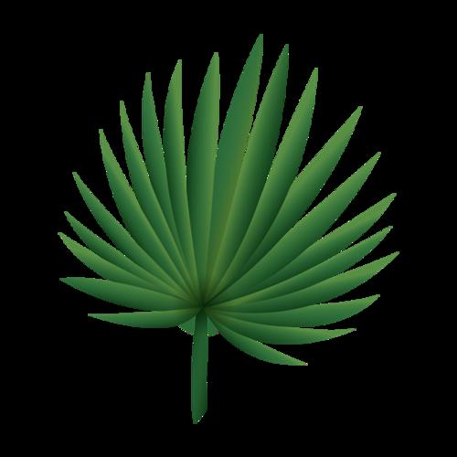 棕榈叶手绘图片