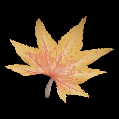 秋季落叶素材